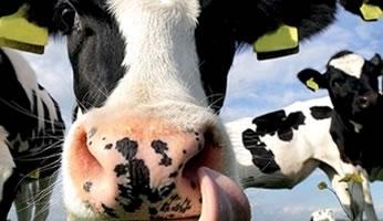 De leukste kaas- kijkboerderij van Drenthe