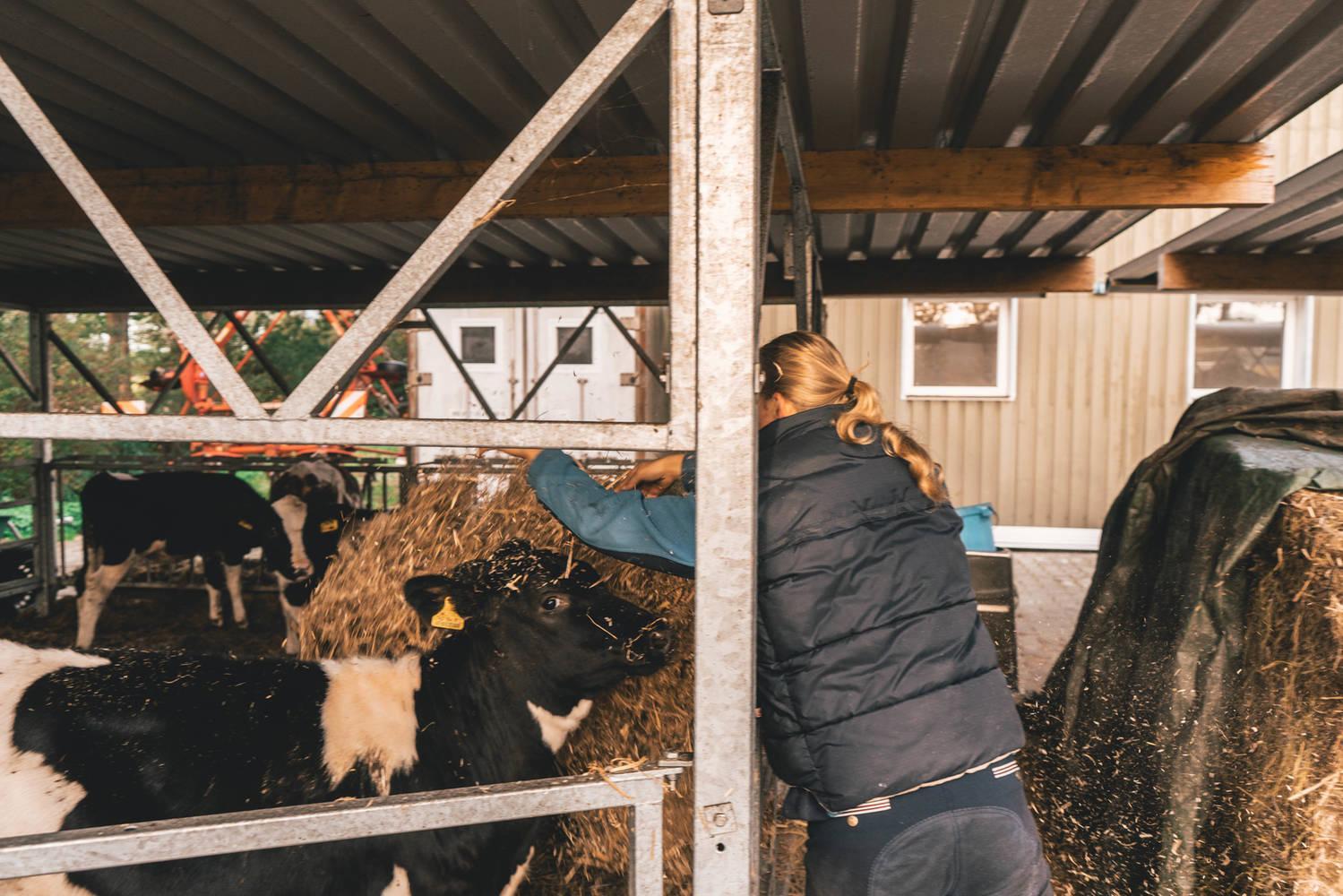 Kijkboerderij